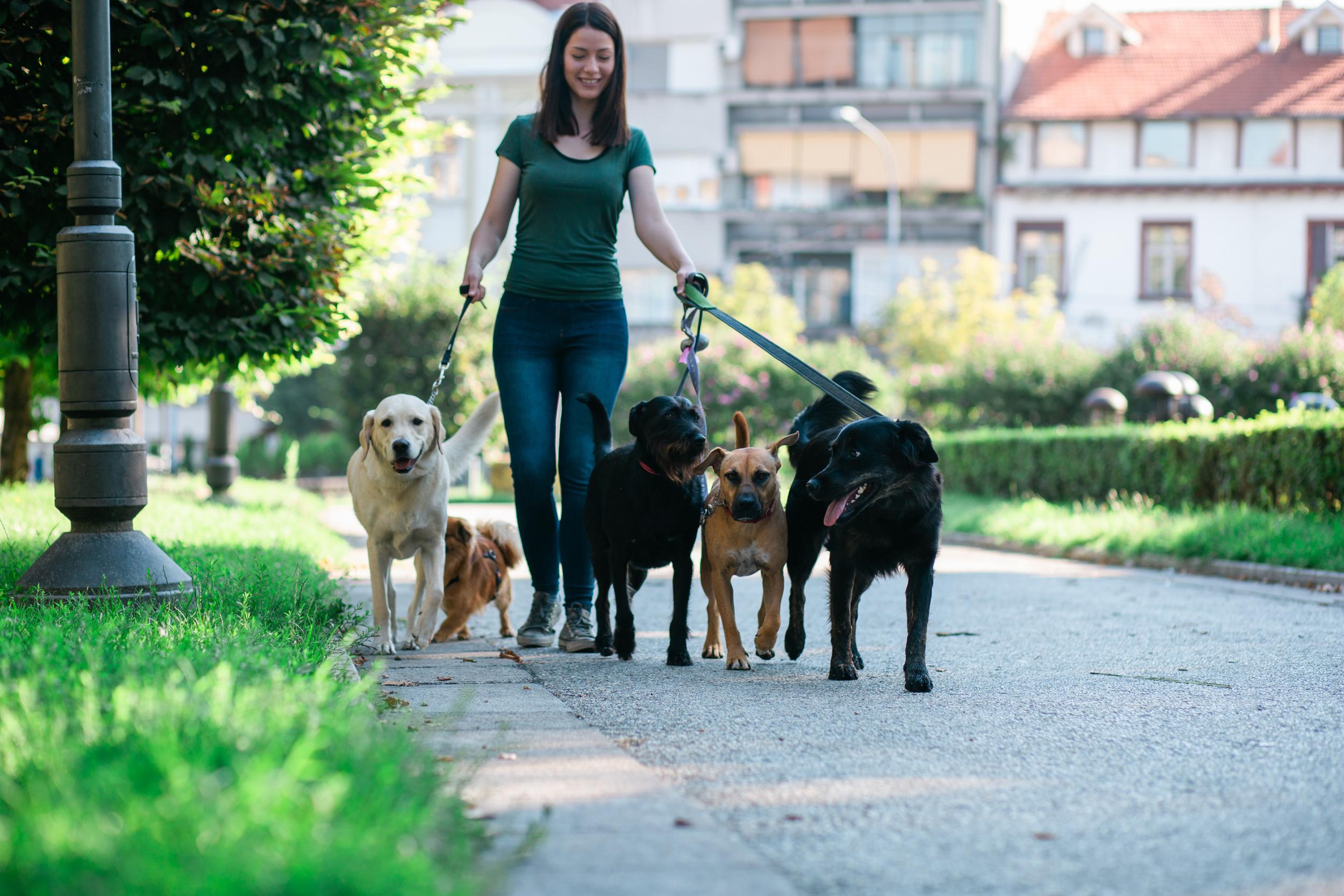 Dog Walker in Dog Park